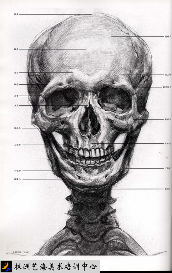 人物头部在正面和正侧面平视时是一个平行透视的立方体,透